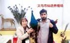 中网市场ChinaOMP.com_中网头条发布: 义乌市仙进养殖场专业养殖各种孔雀等多种动物