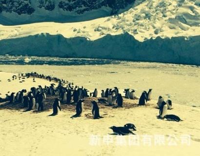 新申亚麻共襄南极论坛 思考人类文明 关注地球环境