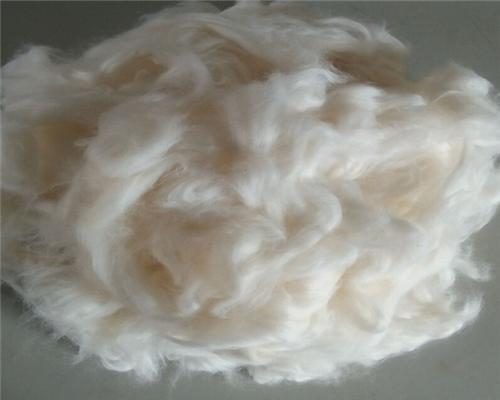 棉花老根横切,次生结构